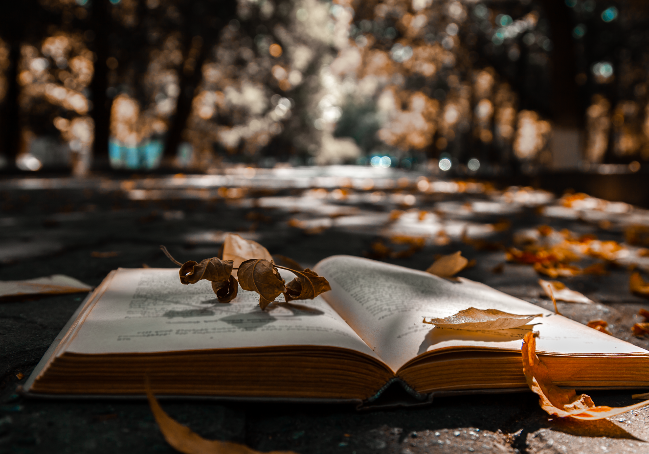 Stock_Book_Fall_Leaves-01